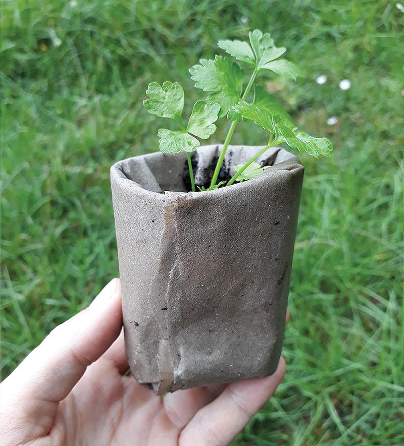 Alternative Nachhaltige Saatgut Anzieh Container Aussaat Behaelter Gemuese Garten Balkon Fensterbank DIY Papier Toepfchen