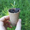 Alternative Sustainable Seed Raising Containers Coconut Cardboard Punnets 1
