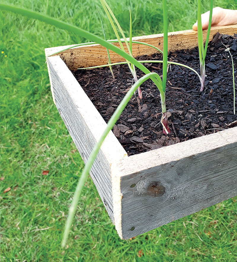 Alternative Sustainable Seed Raising Containers DIY Pallet