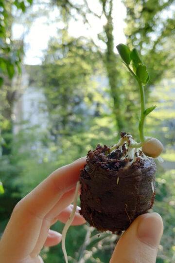 Essen Gemuese Selbst Anbauen Nachhaltige Bio Alternativen Optionen Fuer Saatgut Ansiehen Kokos Quelltabs 2 1