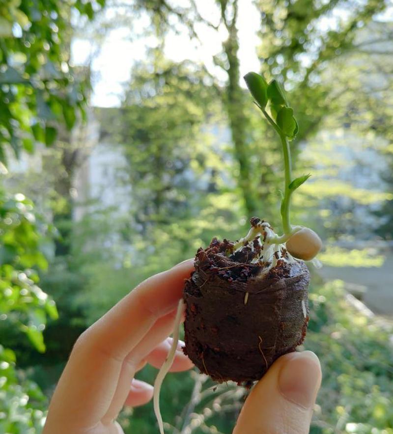 Essen Gemuese Selbst Anbauen Nachhaltige Bio Alternativen Optionen Fuer Saatgut Ansiehen Kokos Quelltabs 2